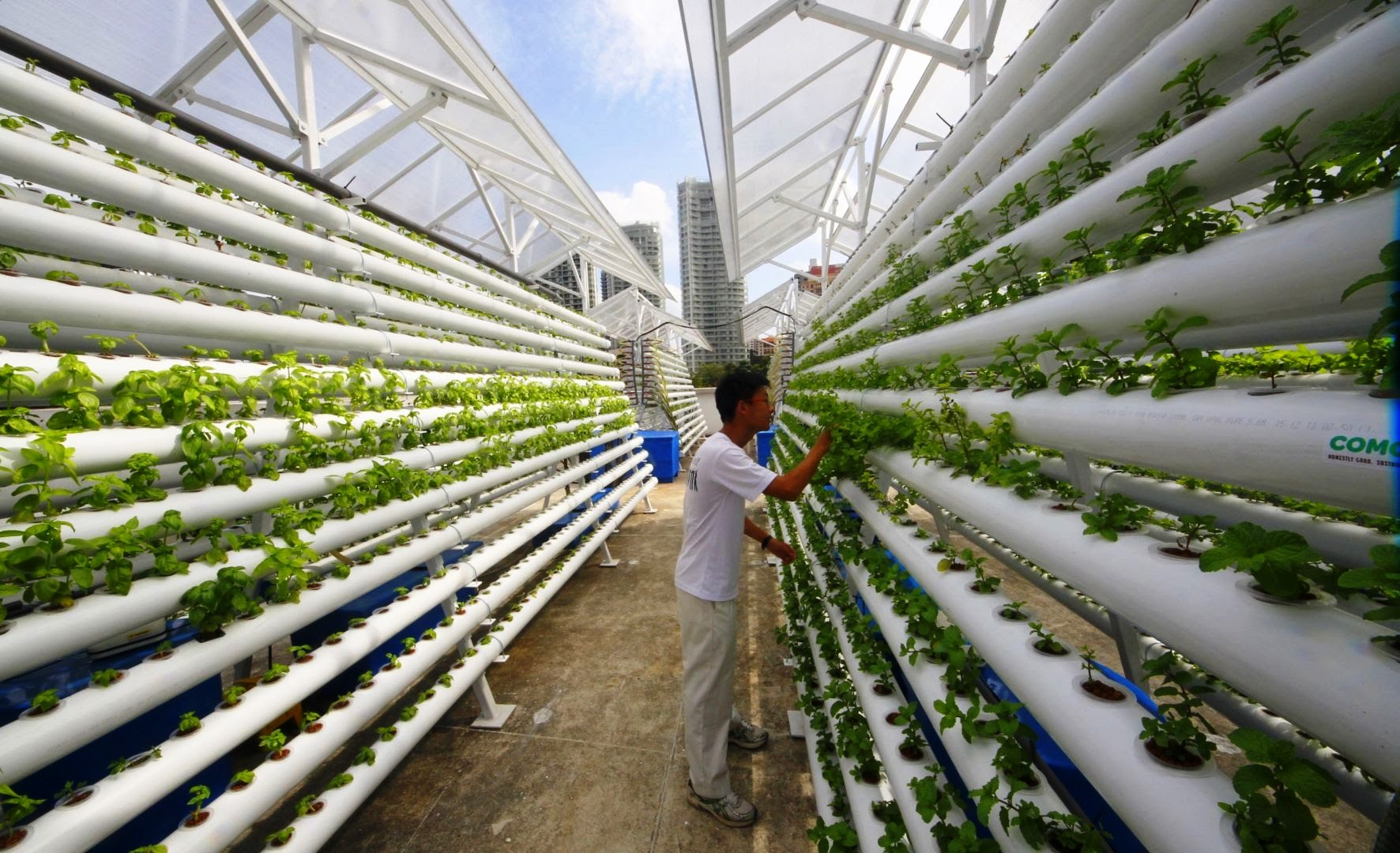 উল্লম্ব কৃষি (Vertical Farming)