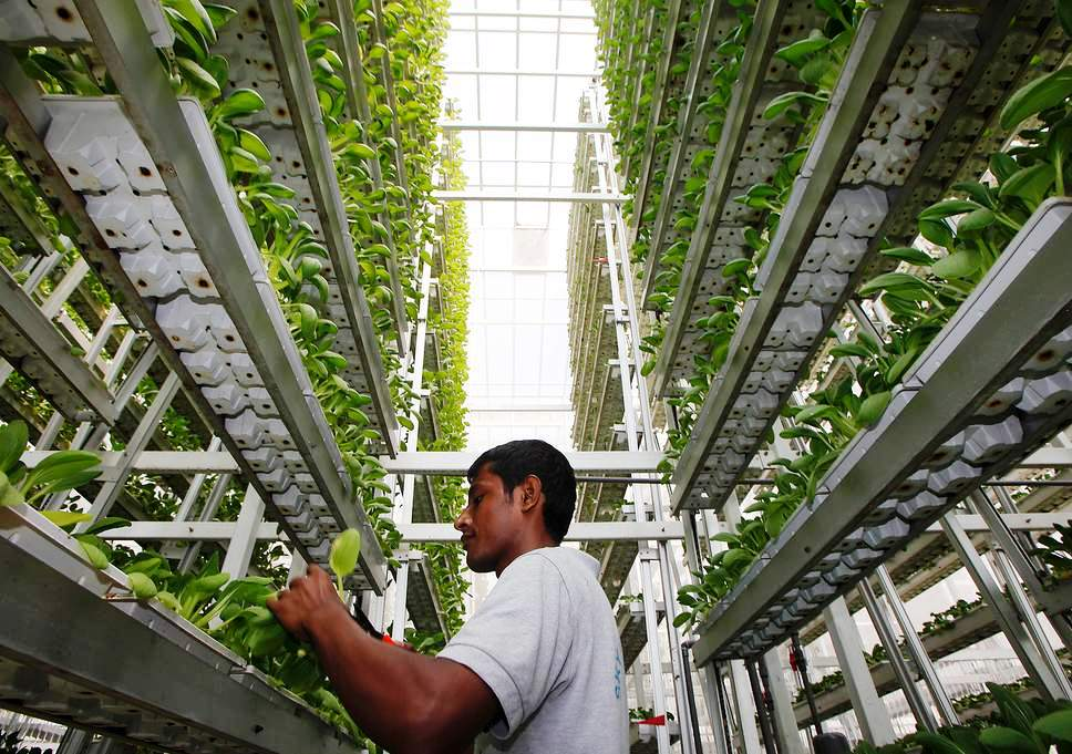 উল্লম্ব কৃষি (Vertical farming) - খাদ্য সংকট সমাধানের এক নতুন উদ্ভাবনী চিন্তন
